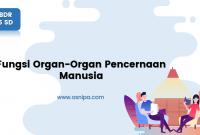 Fungsi Organ-Organ Pencernaan Manusia : BDR Kelas 5 SD