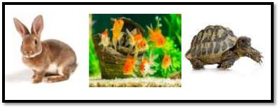 Contoh Cerita Cara Merawat Kelinci, Ikan Hias, dan Kura-Kura