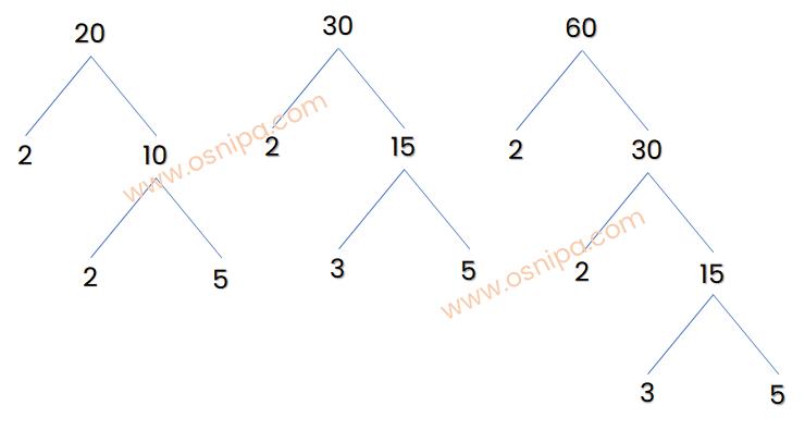 Pohon faktor 20, 30, dan 60