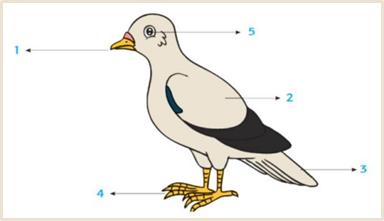 Kamu telah mengenal beberapa jenis hewan beserta bagian-bagian tubuh dan fungsinya. Sekarang, amatilah bagian-bagian tubuh burung berikut ini. Ada Paruh, sayap, ekor, cakar, dan mata. Tuliskanlah fungsi setiap bagian-bagian tubuh burung tersebut pada tabel yang tersedia!