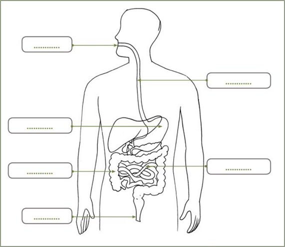Selanjutnya tugas Ananda adalah. Kalian lengkapi diagram yang terdapat pada lampiran kemudian lengkapilah dengan alur perjalanan makanan dari rongga mulut hingga keluar melalui anus. Berikan warna yang menarik agar hasilnya lebih indah!