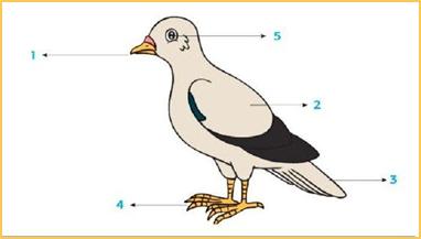 1. Bagian burung yang ditunjukkan pada nomer 2 berfungsi untuk….
