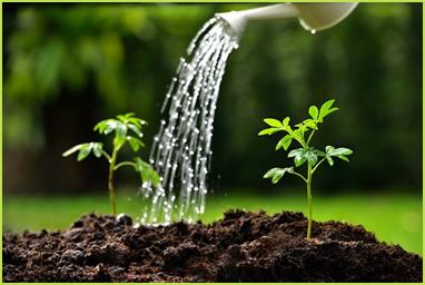 Salah satu cara merawat tanaman adalah menyiraminya seperti gambar tersebut. Hal tersebut disebabkan….