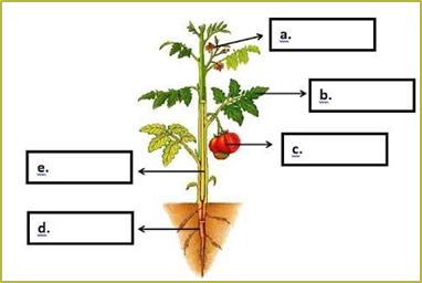 8. Bagian tumbuhan yang berfungsi sebagai alat perkembangbiakan ditunjukkan oleh huruf….
